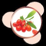 Wolfberry Goji